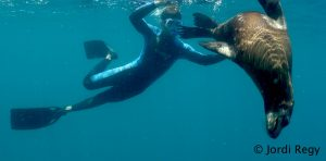 LA PAZ DIVING PADI WITH SEA LIONS