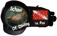 School of Diving La Paz
